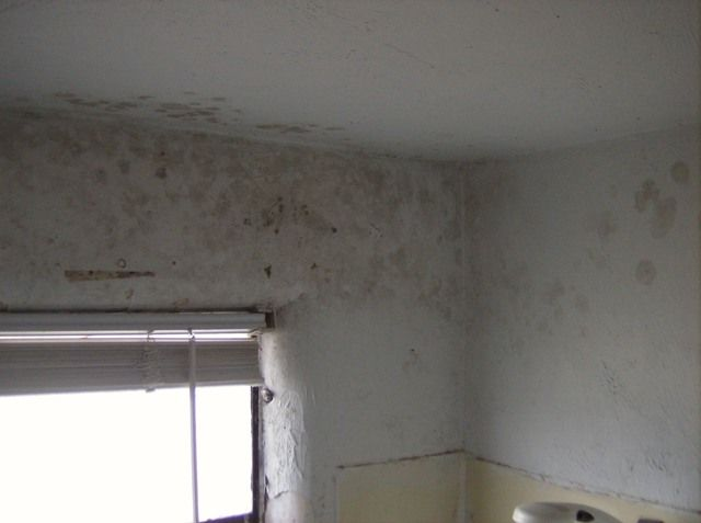 Treat Mould And Fungus Connacht Painting - Painting over mold in bathroom