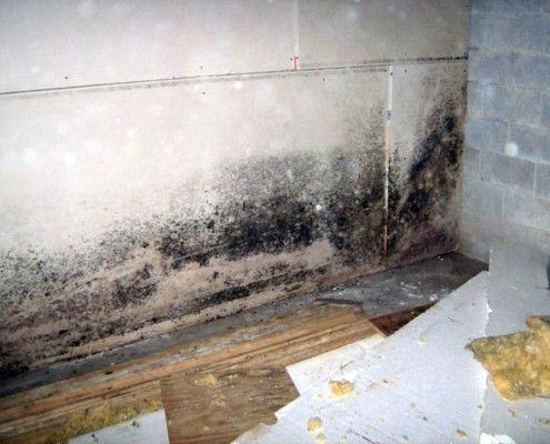 Black Mould Removal for Painting